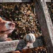 La dépense mentale chez le chien
