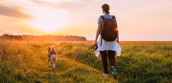 Promenade durant votre absence
