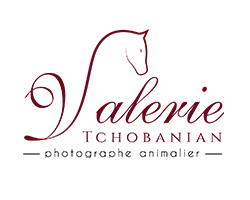 valerie-tchobanian-logo-w250